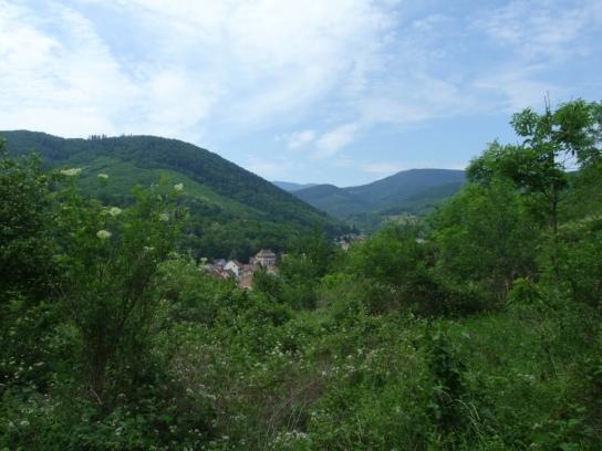 Vosges Day 3UNADJUSTEDNONRAW_thumb_1dba