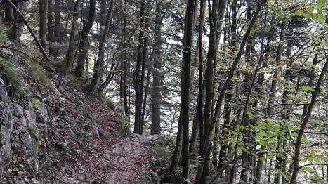 Beech leaf path - Reit-im-Winkl