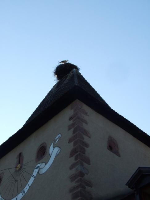 Evening stork Hdl2RHi0S5e1idvuAjjzaw_thumb_1e0e