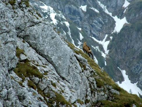 Schneibstein 2nd attempt Ibex