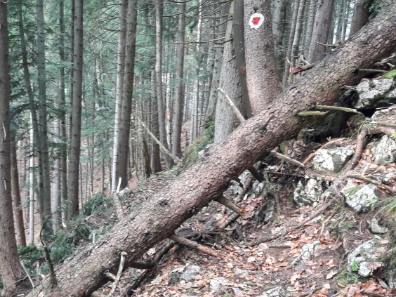 Obstacle ahead.Geierstein. 9th November 2017. Route 611 frm Lenggries