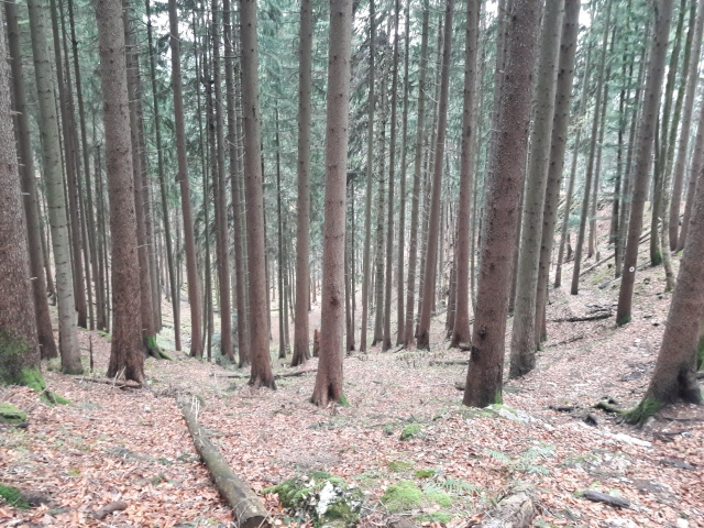 Path just visible to the right. Geierstein 5. 9th November 2017. Route 611 frm Lenggries