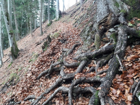 Tricky path.Geierstein. 9th November 2017. Route 611 frm Lenggries